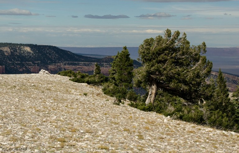 Marble View Kaibab National Forest Arizona