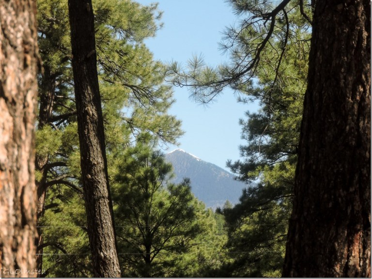 Snow on Mt Humphreys from Kit Carson RV Park Flagstaff Arizona