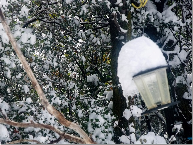 Snow on bird feeder Yarnell Arizona