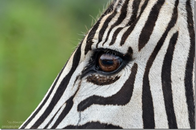 Truck reflected in zebra's eye Pilanesburg Game Reserve South Africa