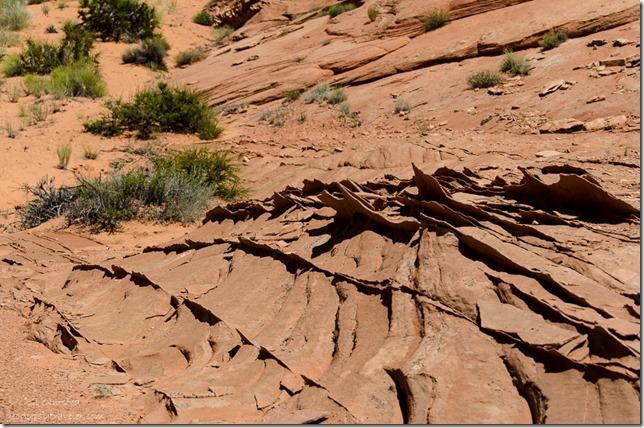 Sandstone fins Upper Buckskin Gulch Paria Canyon/Vermilion Cliffs Wilderness area Utah