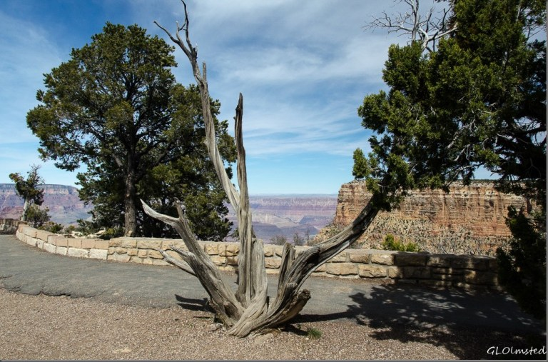 Moran Point South Rim Grand Canyon National Park Arizona