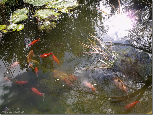 Fish in pond at Best Friends Animal Sanctuary Kanab Utah
