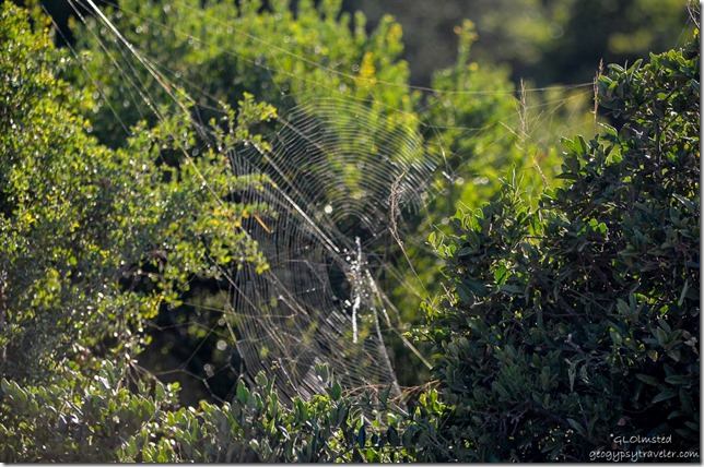 Garden Globe spider Addo Elephant National Park South Africa