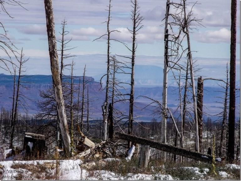 Snow in 2006 Warm fire & Vermilion Cliffs through trees along SR67 N Kaibab National Forest Arizona