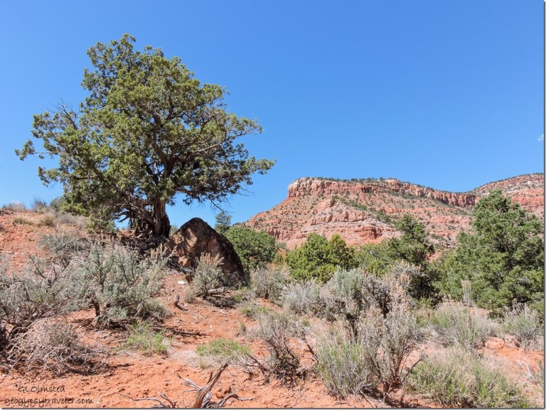 Vermilion Cliffs Bunting Trail Kanab Utah