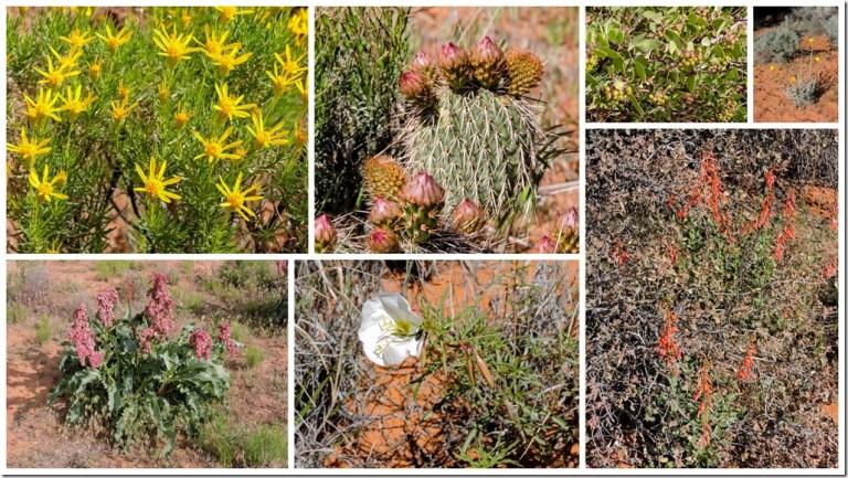 Wildflowers Snow Canyon State Park Utah