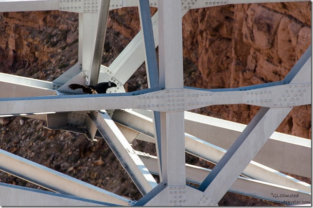 04 DSC_5371lerw CA Condor 722 Navajo Bridge Marble Canyon SR89A AZ g-2