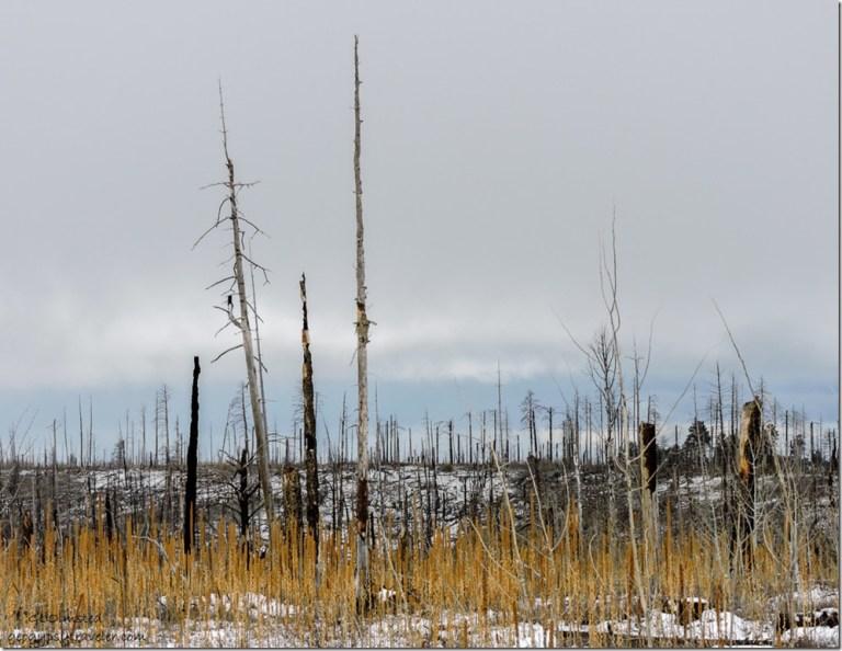 Snow 2006 Warm Fire burn SR67 South Kaibab National Forest Arizona