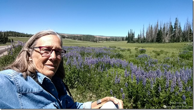 Gaelyn wildflowers Cedar Breaks National Monument Utah