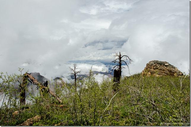 Fog in canyon Walhalla Plateau North Rim Grand Canyon National Park Arizona