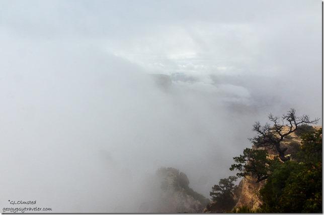 Foggy canyon Cape Royal North Rim Grand Canyon National Park Arizona