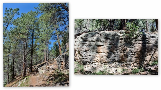 Widforss Trail North Rim Grand Canyon National Park Arizona