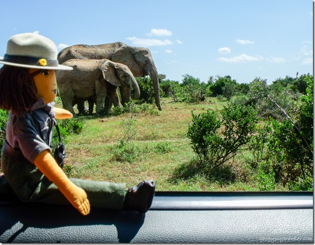 Ranger Wanda Lust & elephants Addo Elephant National Park South Africa