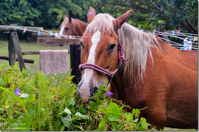 Horses at Wild Spirit Backpackers Lodge Nature's Valley South Africa