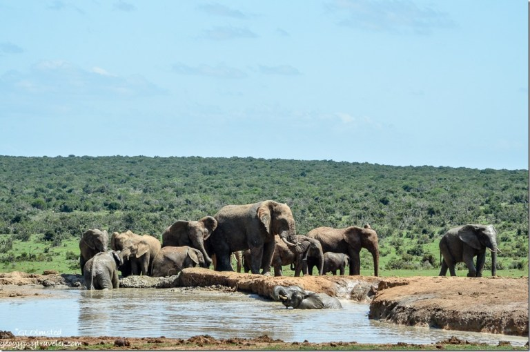 Elephants at waterhole Addo Elephant National Park South Africa