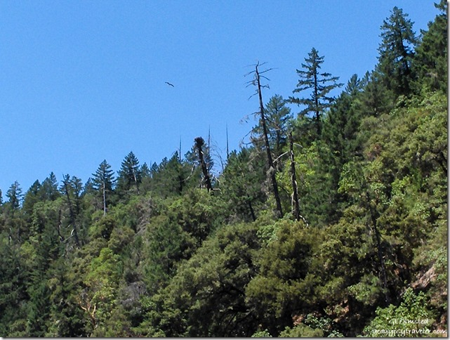 Osprey nest Rogue River Oregon