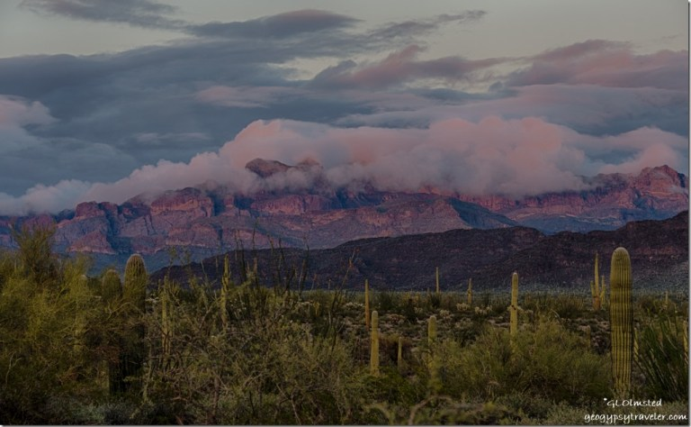 Sunset cactus low clouds Ajo Range Organ Pipe Cactus National Monument Arizona