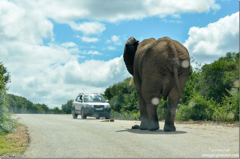 Elephant & car Addo Elephant National Park South Africa