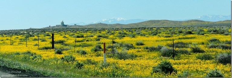 yellow flowers radar US395 South Boron California