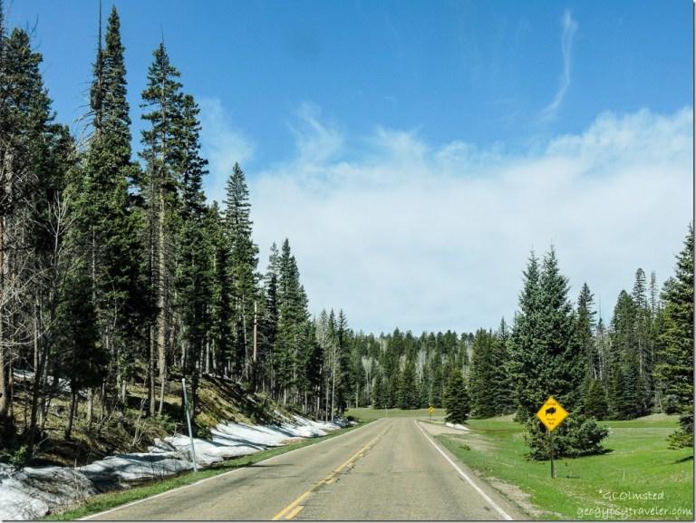 snow forest Bison curve SR67 North North Rim Grand Canyon National Park Arizona