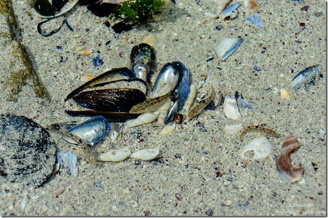 Shells & fish in shallow water Atlatic Ocean West Coast National Park Langebaan South Africa