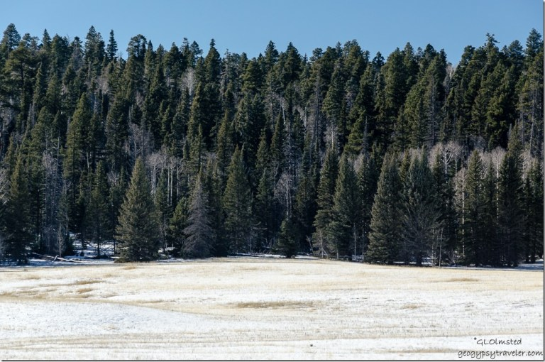 Snow meadow SR67 Kaibab National Forest Arizona