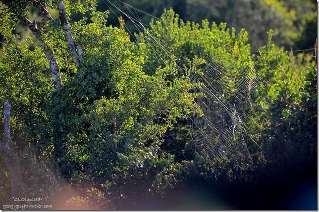 Garden Globe spider Addo Elephant National Park South Africa