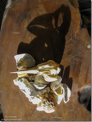Shells & bird skull with shadow Yarnell Arizona