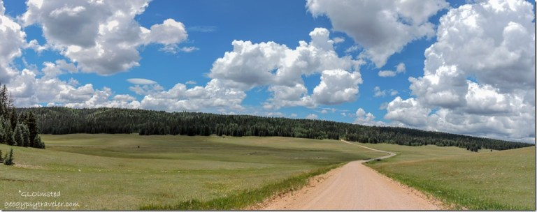 meadow jct FR611 & 25 & SR67 Kaibab National Forest Arizona