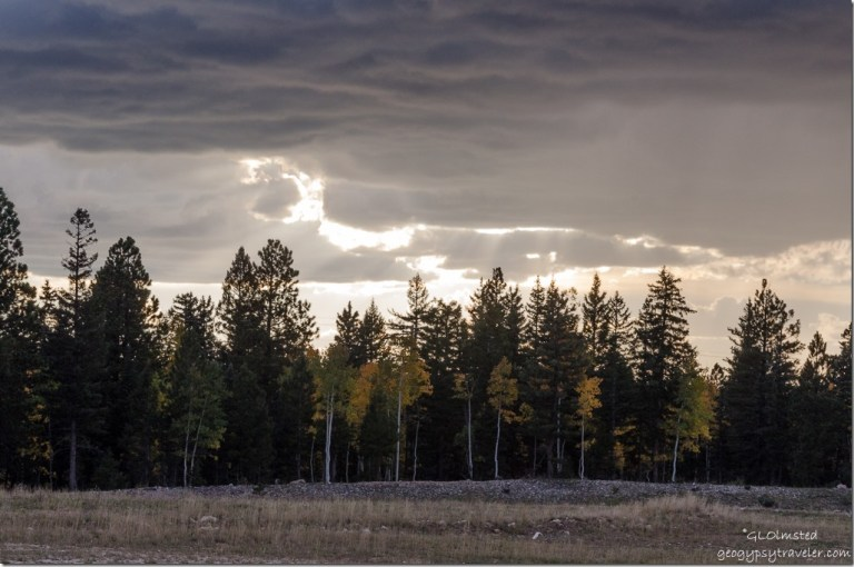 Stormy sky over Fall aspen at snow park off FR270 Kaibab National Forest Arizona