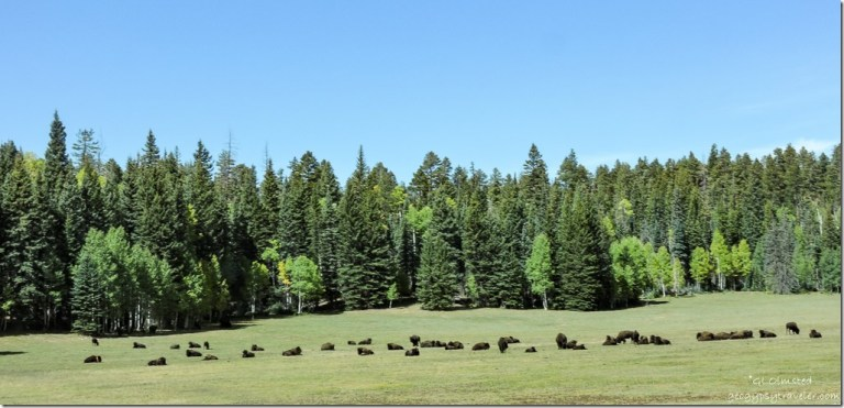 bison meadow North Rim Grand Canyon National Park Arizona