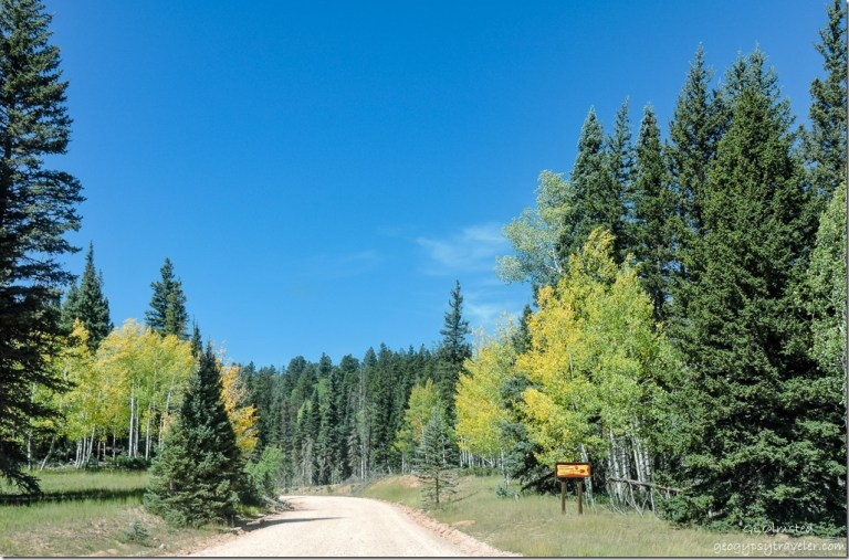 fall aspen FR22 Kaibab National Forest Arizona