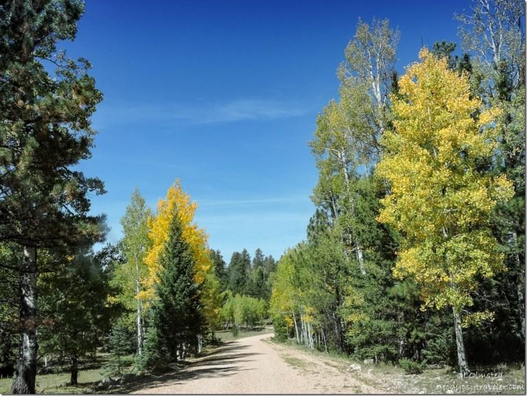 fall aspen FR429 Kaibab National Forest Arizona