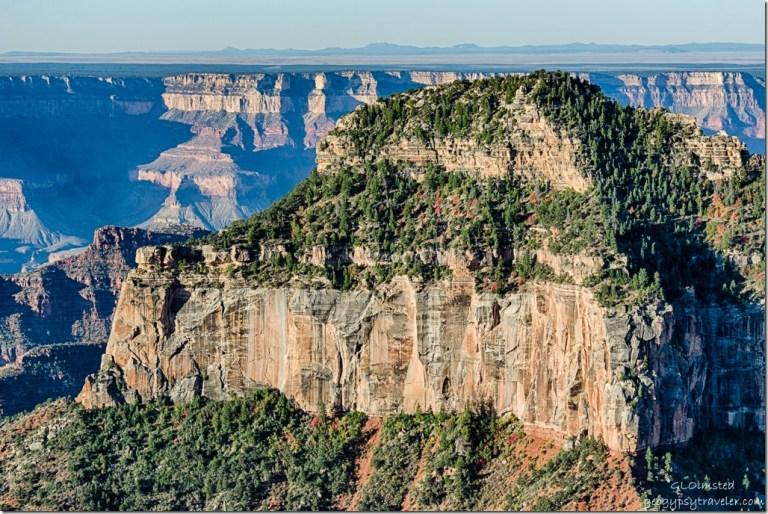 fall maple Oza Butte North Rim Grand Canyon National Park Arizona