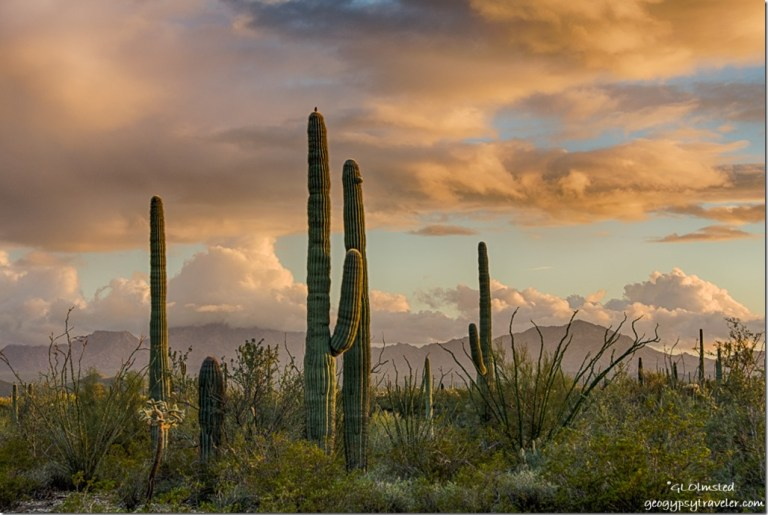 Sonoran desert mountains low clouds sunset Organ Pipe Cactus National Monument Arizona
