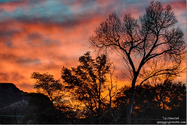 trees sunrise Yarnell Arizona