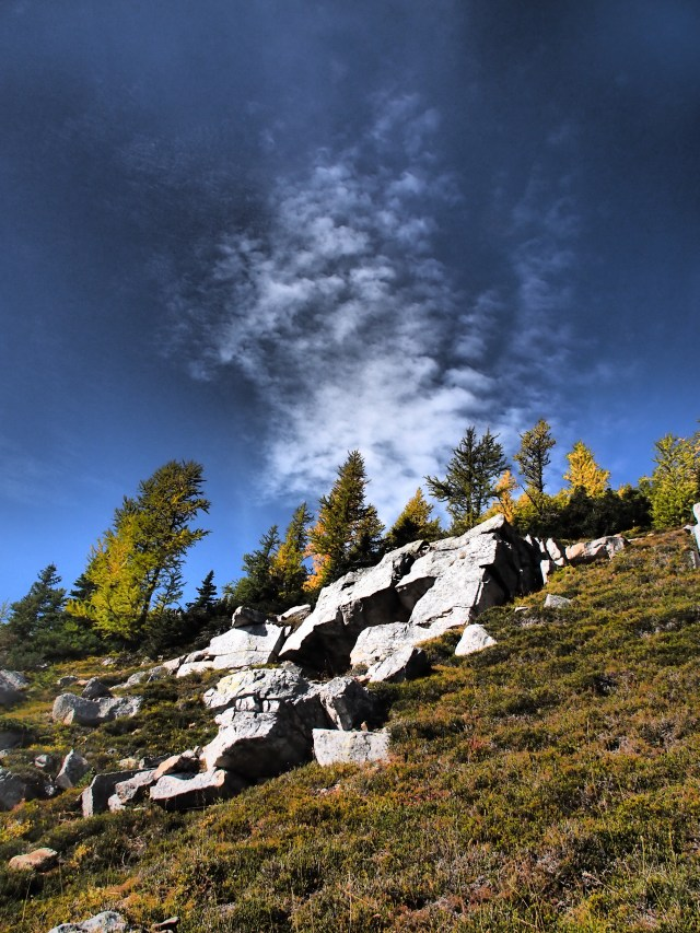 Larch on the slopes of Mount St. Piran