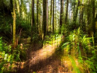 Path through the rainforest