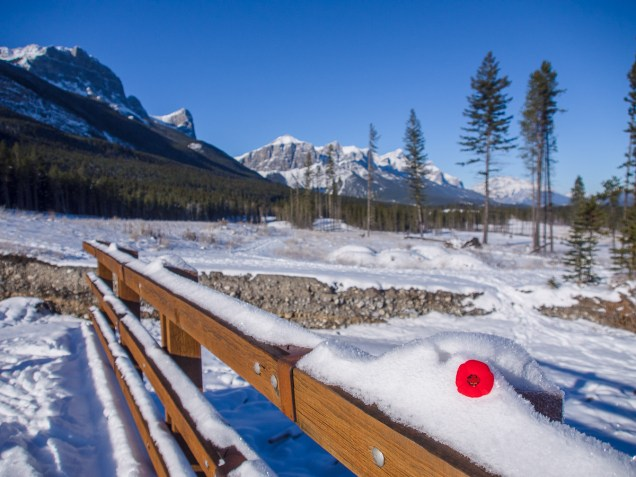 Poppy in the Bow Valley