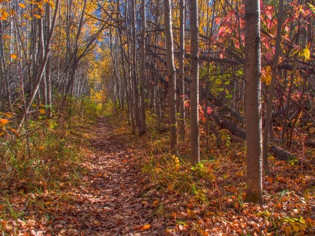 South-Glenmore-Park-fall-colour