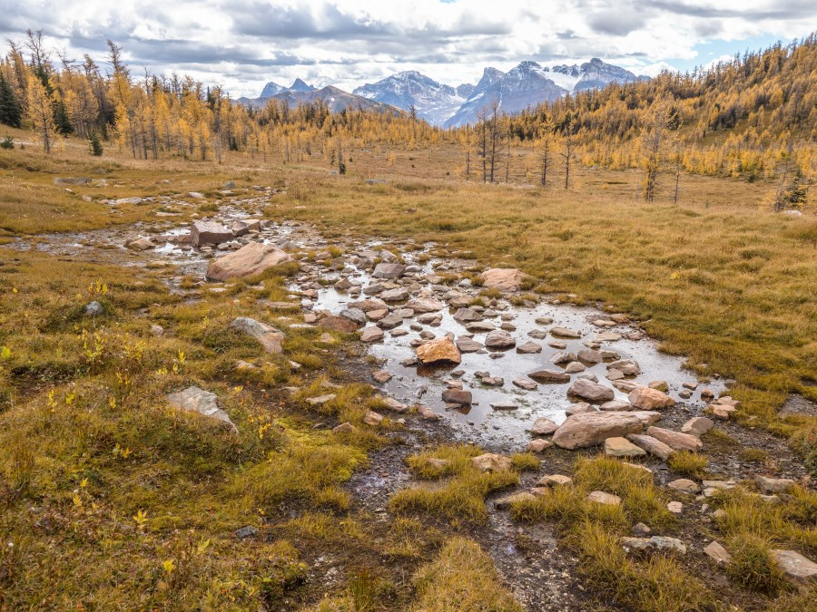 mountain pond and larch forest