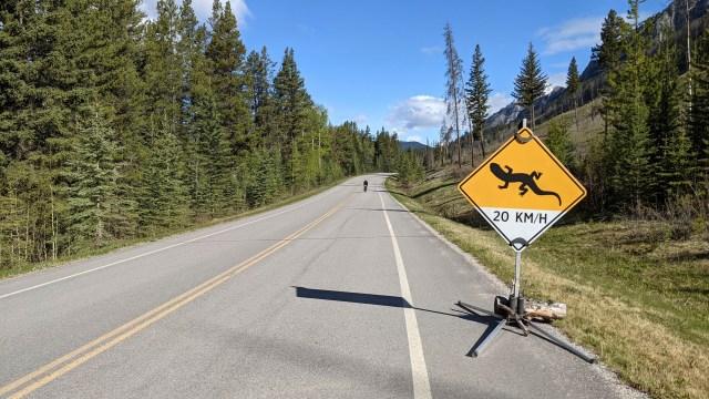 temporary salamander crossing sign