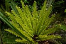 Beautiful fern. Tracey Benson © 2013