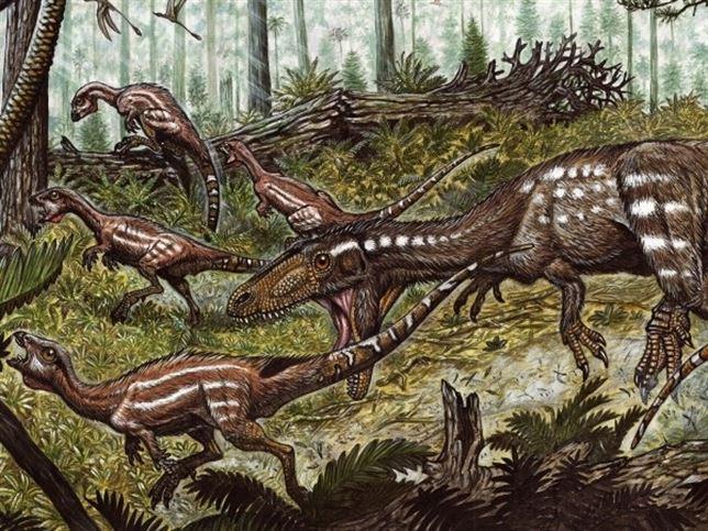 Tachiraptor1