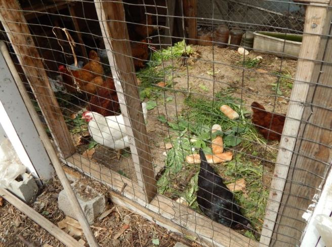Chicken coup. South 40 Community Garden.