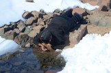 Tebogo drinking from a meltwater pool