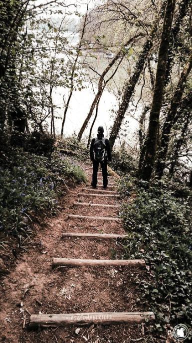 Sous-bois randonnée de la Rance - Dinan, Bretagne