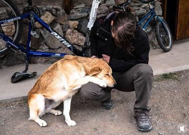 Eno et une chienne au Monte Hostcamp