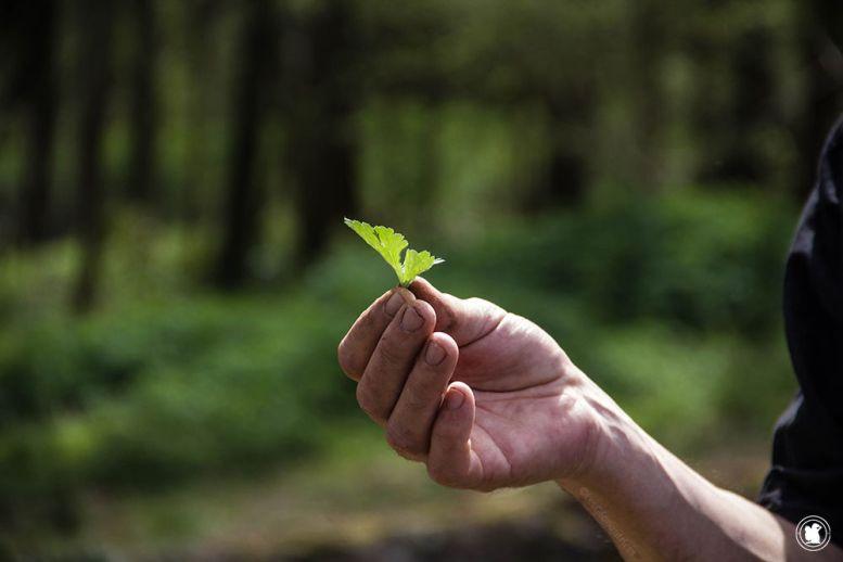 En apprendre plus sur les plantes sauvages comestibles